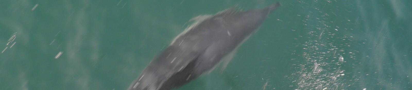 Promenade avec les dauphins - A3PB Croisières