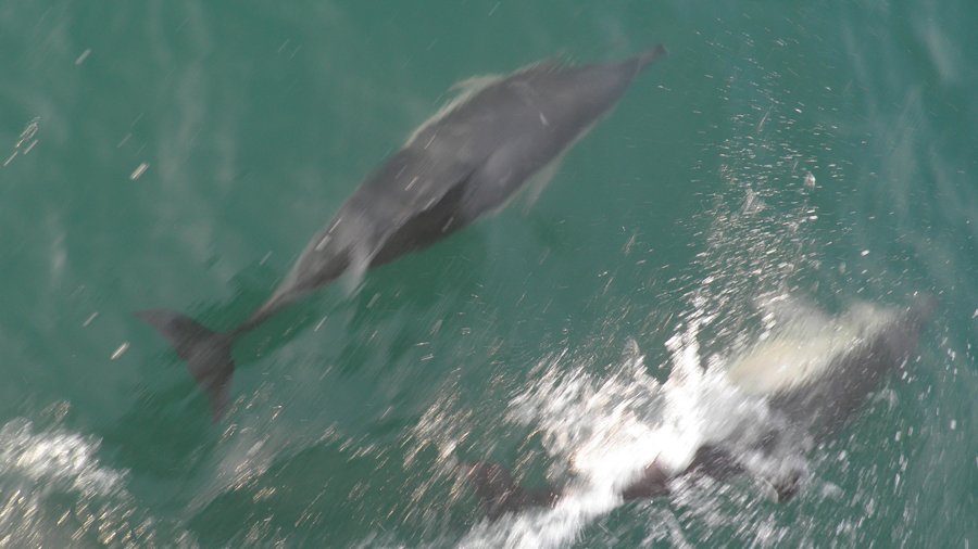 Favori Promenade avec les dauphins - A3PB Croisières | Promenade et pêche  QW82